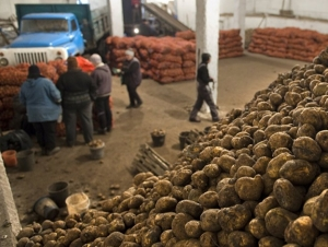 Фарғонада бозорқўм 100 миллион сўмлик картошкани талон-тарож қилди