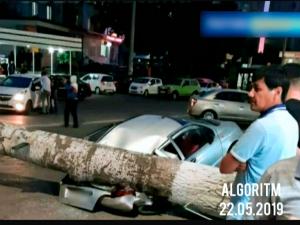 Тошкентда кучли шамол туфайли дарахт автомобилнининг устига қулаб тушди (видео)
