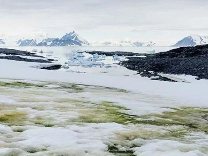 "Антарктида ""гуллади"" (видео)"