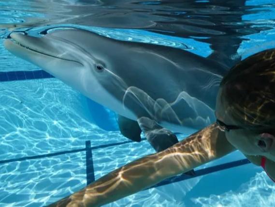 Хитойда гиперреалистик робот-дельфин ясалди (видео)