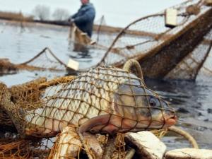 Жиззахда браконьерлар қўлга олинди
