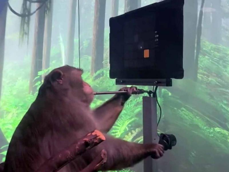 """Ilon Mask maymun miyasiga chip joylashtirib,  unga """"Ping Pong""""  o'ynatdi"""