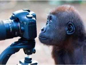 Биринчи мақола: Биз маймун бўлишдан чарчадик